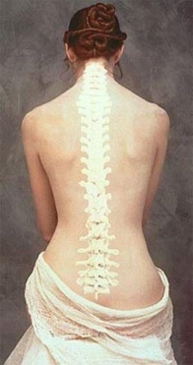 columna vertebral-