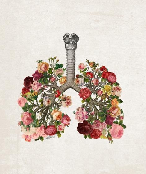 pulmones2