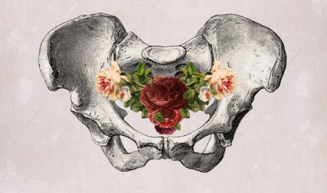 pelvis.