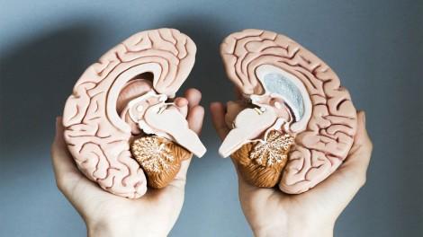 Feldenkrais y Cerebro